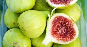 figs1